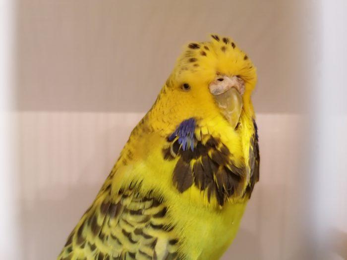 Peter and Sandra Stevens best unshowable bird